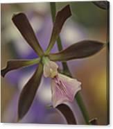 He Pua Ke Aloha - The Flower Of Love - Orchidea Tropicale Canvas Print