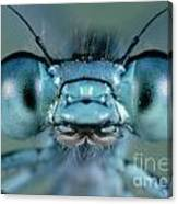Head And Compound Eyes Of Damselfly Canvas Print