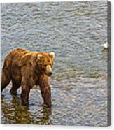Head Grizzly Bear And Sea Gull In Moraine River In Katmai Np-ak  Canvas Print