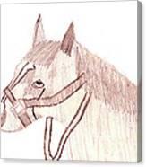 Head Of A Horse Canvas Print