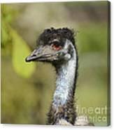 Head Of An Australian Emu Canvas Print