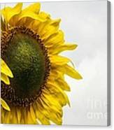 Head Up To The Rains - Sunflower Canvas Print