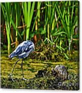 Headless Heron Canvas Print