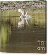 Headless Snowy Egret Of Rum Creek Canvas Print