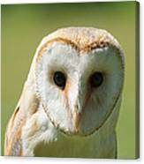 Headshot Of Common Barn Owl Canvas Print