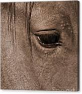 Heart Of A Horse Canvas Print