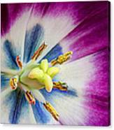 Heart Of A Tulip - Square Canvas Print