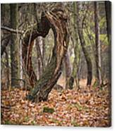 Heart Of Nature Canvas Print