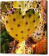 Heart Shaped Cactus Canvas Print