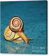 Heart Snails Canvas Print