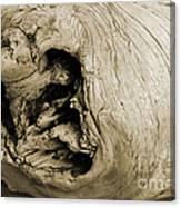 Heartwood - Sepia Tone - Wonderwood Collection - Olympic Peninsula Wa Canvas Print