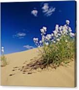 Hearty Wild Stock Wildflowers Growing Canvas Print