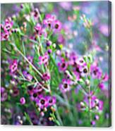 Heather Canvas Print