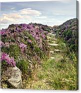 Heather On Simonside Hills Canvas Print