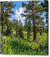 Heaven In The High Country Canvas Print