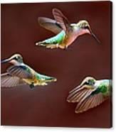 Heavenly Birds Canvas Print