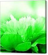 Heavenly Peony Green Canvas Print