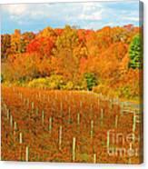 Heavenly Vineyard  Canvas Print