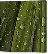 Heavy Rain Canvas Print