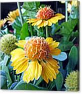 Helenium Flowers 1 Canvas Print