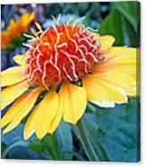 Helenium Flowers 2 Canvas Print