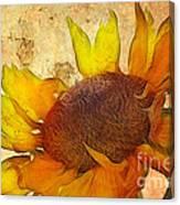 Helianthus Canvas Print