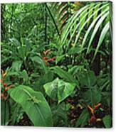 Heliconia And Palms With Green Anole Canvas Print