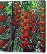 Heliconia Haven Canvas Print