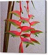 Heliconia Platystachys Canvas Print