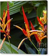 Heliconia Psitacorum Canvas Print
