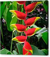 Heliconia Rostrata 2 - A Blooming Heliconia Rostrata Flower Canvas Print