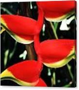 Heliconia Rostrata Canvas Print