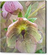 Hellebore Flower Canvas Print