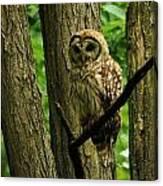 Hello Barred Owl Canvas Print