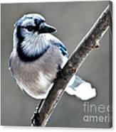 Hello Blue Canvas Print