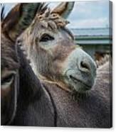 Hello Donkey Canvas Print