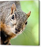 Hello Squirrel Canvas Print