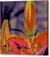 Hemerocallis  Canvas Print