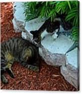 Hemingway Cats Canvas Print