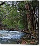 Hemlock Creek Edge Canvas Print