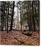 Hemlock Forest Canvas Print