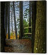 Hemlock Ravine Park Canvas Print
