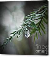 Hemlock Tears Canvas Print
