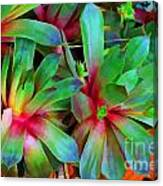 Hen And Chicks  Digital Paint Canvas Print