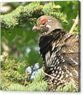 Hen In A Spruce Tree Canvas Print