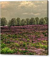 Henbit Up To The Bradfords Canvas Print
