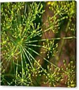 Herbal Abstract Canvas Print