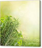 Herbs With Copyspace Canvas Print