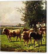 Herd Of Cows Canvas Print