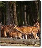 Herd Of Deer In A Dark Forest Canvas Print